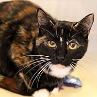 Adopt A Pet :: Willie Kitten - Pacific Grove, CA