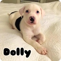 Adopt A Pet :: Dolly - Tracy, CA