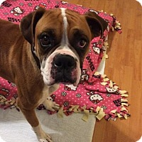 Adopt A Pet :: Shirley Temple - Hurst, TX