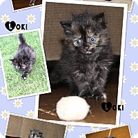 Adopt A Pet :: Loki - oklahoma city, OK
