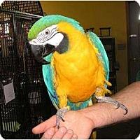 Adopt A Pet :: Kelly - Edgerton, WI