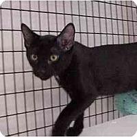 Adopt A Pet :: Eben - Deerfield Beach, FL