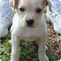 Adopt A Pet :: Jamee - Plainfield, CT
