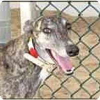 Adopt A Pet :: Tiger - St Petersburg, FL