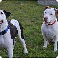 Adopt A Pet :: Johnny & Cash - Phoenix, AZ