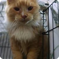Adopt A Pet :: Travis - Centralia, WA