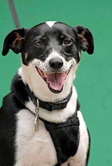 Border Collie Mix Dog for adoption in Pottsville, Pennsylvania - Logan