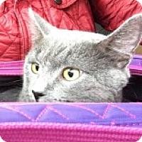Adopt A Pet :: Ivan - McHenry, IL