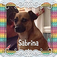 Adopt A Pet :: Sabrina - Greensboro, MD