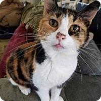 Adopt A Pet :: Gabby - Novato, CA