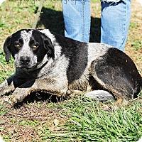 Adopt A Pet :: Carly - Glastonbury, CT