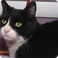 Adopt A Pet :: Phoebe - Media, PA