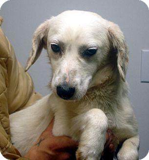 Beagle Mix Dog for adoption in Greencastle, North Carolina - Graham