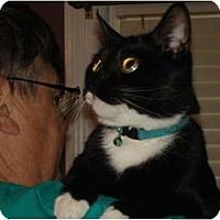 Adopt A Pet :: Jake - Chesapeake, VA