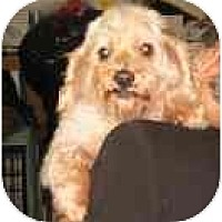 Adopt A Pet :: Clarita - Miami, FL