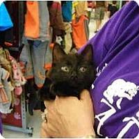Adopt A Pet :: Neko - Riverside, RI