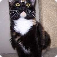 Adopt A Pet :: K-Hirsh1-Alexis - Colorado Springs, CO