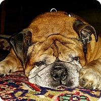 Adopt A Pet :: Otis - Strongsville, OH