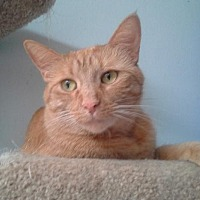 Adopt A Pet :: Emma - Sterling Heights, MI