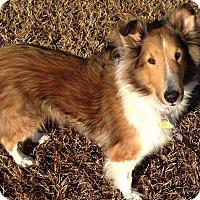Adopt A Pet :: Hope (Alabama) - Alderson, WV