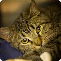 Adopt A Pet :: YULE - Frisco, CO