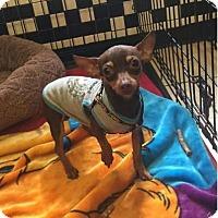 Adopt A Pet :: Macho - Boca Raton, FL