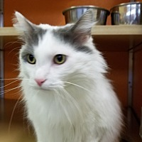 Adopt A Pet :: Bart - Elyria, OH