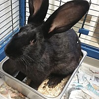 Adopt A Pet :: Ken - Chippewa Falls, WI