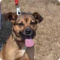 Adopt A Pet :: Hasini - Acworth, GA