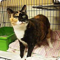 Adopt A Pet :: Tara - Ocean City, NJ