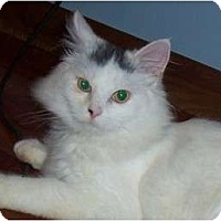 Adopt A Pet :: Bailey - Catasauqua, PA