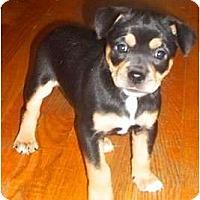 Adopt A Pet :: Mekalina - Albany, NY