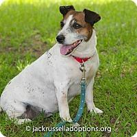 Adopt A Pet :: Nog - Conyers, GA