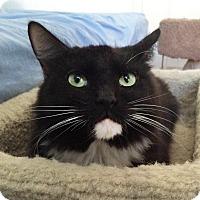 Adopt A Pet :: Midnight - Irvine, CA