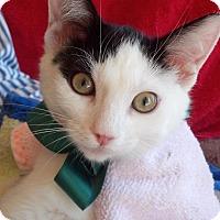 Adopt A Pet :: Mookie - Scottsdale, AZ