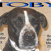 Adopt A Pet :: Toby - Richmond, MO