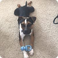 Adopt A Pet :: Sage - San Diego, CA