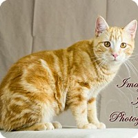 Adopt A Pet :: Rusty - Crescent, OK