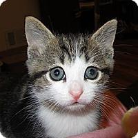 Adopt A Pet :: Bella's Litter - Richfield, OH