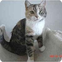 Adopt A Pet :: Niblet - New York, NY