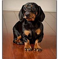 Adopt A Pet :: Slinky - Owensboro, KY