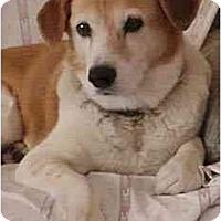 Adopt A Pet :: Snoopy Girl - Phoenix, AZ