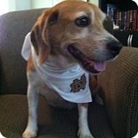 Adopt A Pet :: Bruiser - Phoenix, AZ