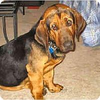Adopt A Pet :: Douglas - Phoenix, AZ