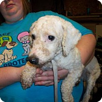 Adopt A Pet :: Verges - DAYTON, OH