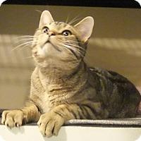 Adopt A Pet :: Dodger - Edmonton, AB