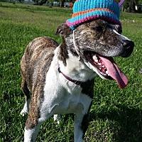 Adopt A Pet :: Sasha - Simsbury, CT