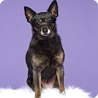 Adopt A Pet :: Ruthie - Baton Rouge, LA