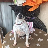 Adopt A Pet :: JUNIE - Elk Grove, CA