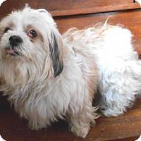 Adopt A Pet :: Roxanne - Sheridan, IL